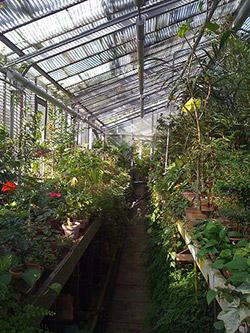 Botanical Garden in Cluj