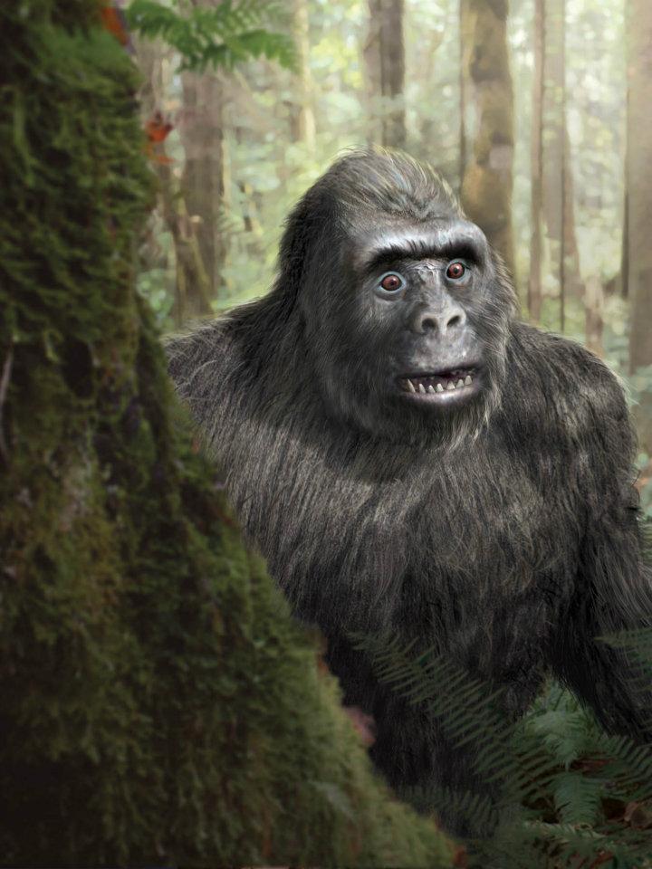 Skepticblog » Bigfoot on the brain