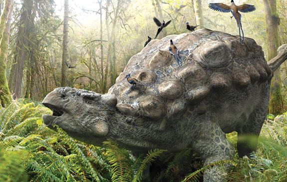 Image from Daniel Loxton's Ankylosaur Attack.  © 2011. All Rights Reserved.