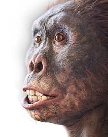 New Daniel Loxton art created for Evolution…