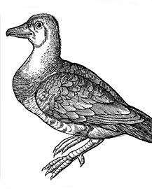 Tree Goose