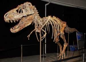 The tarbosaur specimen poached and smuggled from Mongolia by Prokopi and his partners, and almost sold at auction back in May.