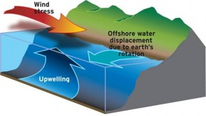 Upwelling occurs when a strong coast-parallel wind forces the shallow waters offshore (due to Coriolis forces), causing deep waters to rise to replace the shallow water