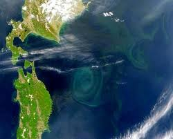 Dense areas of the garbage patch, here east of Japan, are visible from space