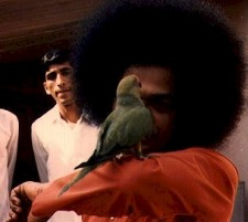 Sai Baba and parrot
